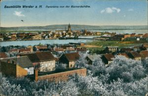 Ansichtskarte Werder (Havel) Panorama von der Bismarckshöhe, Baumblüte 1917