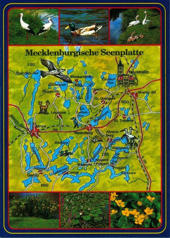 .Mecklenburg-Vorpommern Mecklenburgische Seenplatte - Tiere - Vögel -  1995