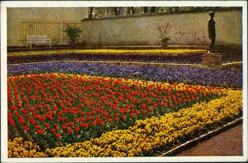 Ansichtskarte Dresden Reichsgartenschau Terrasse am Kugelhaus 1936
