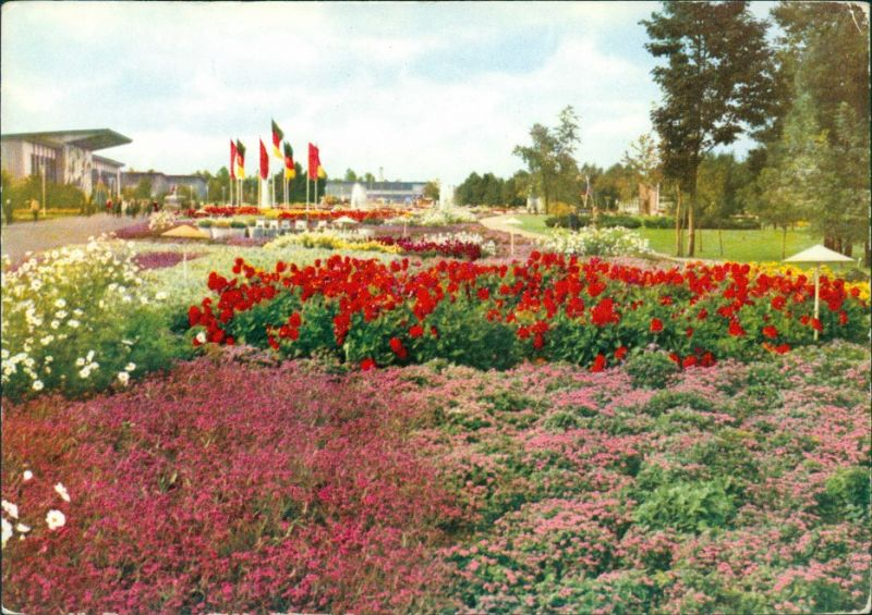 Erfurt Internationale Gartenbauausstellung DDR (IGA) - Sommerblumenwiese 1968