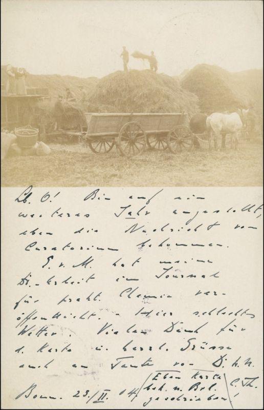Berufe /Arbeit: Bauern  Landwirtschaft bei der Heuernte Privatfoto 1904