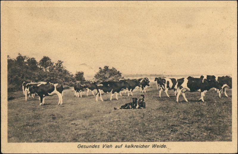 Kalke Wiesen und Weiden! - Bauern Kühe Berufe  Bauern - Landwirtschaft 1928