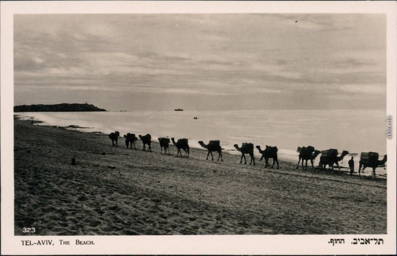Tel Aviv-Jaffa תל אביב-יפו Tel Aviv-Jafo Strand mit Camelen 1950