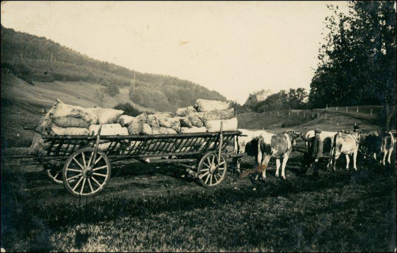 Wald-Michelbach Ochsengespann Weg Berufe Bauer Landwirtschaft 1913 Privatfoto
