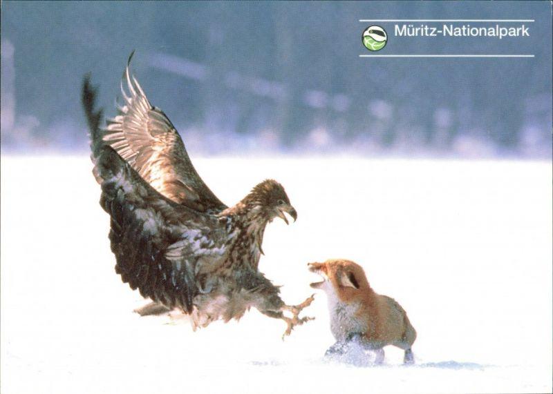 .Mecklenburg-Vorpommern Müritz-Nationalpark: Greiffogel atta kleinen Fuchs 2005