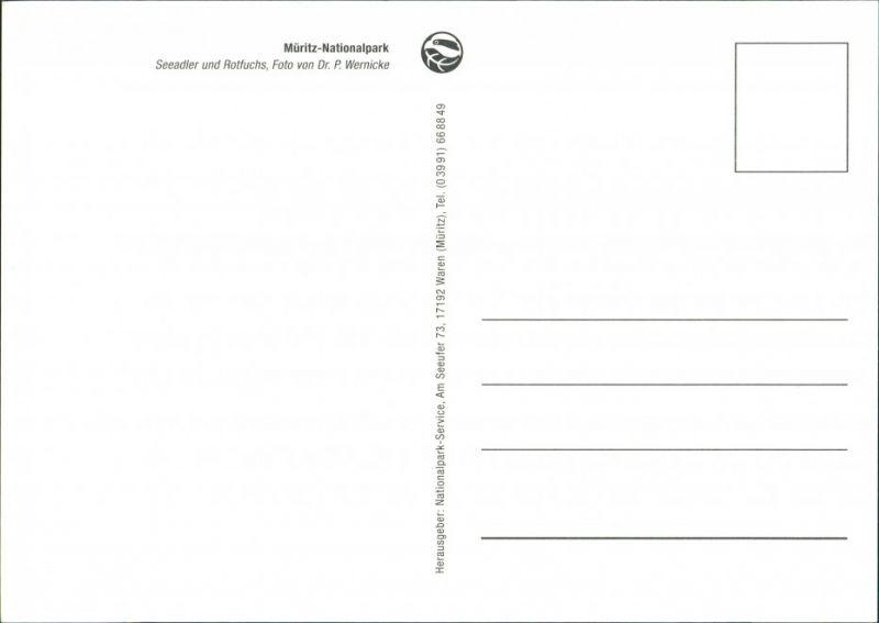 .Mecklenburg-Vorpommern Müritz-Nationalpark: Greiffogel atta kleinen Fuchs 2005 1
