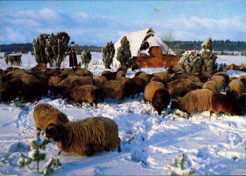 .Niedersachsen Heidschnucken im Schnee, Winter in der Lüneburger Heide 1990 0