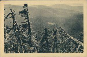 Bodenmais Baum-Wildnis südl. Arber-Hang, Naturschutz Bayern 1920