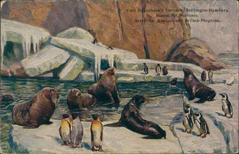Stellingen-Hamburg Tierpark Hagenbeck, Stellingen, Pinguine & Seelöwen 1926