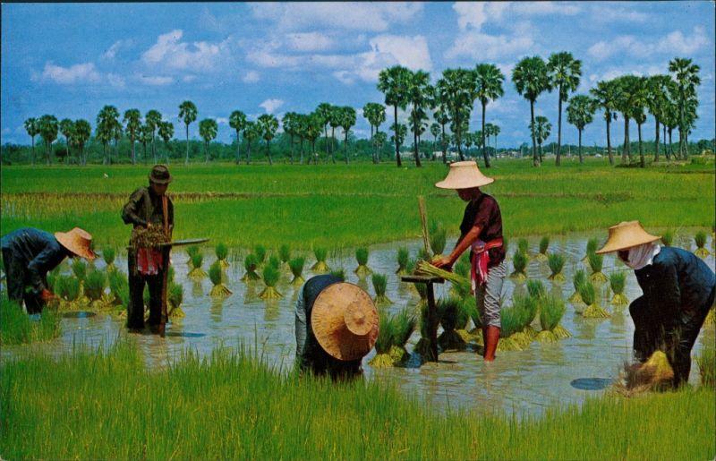 Thailand Cultivation  the Rice in Thailand/Thailand Berufe  Landwirtschaft 1975