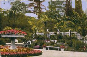 Bad Pyrmont Kuranlagen Partie Palmengarten Palmen Botanik Pflanzen 1928