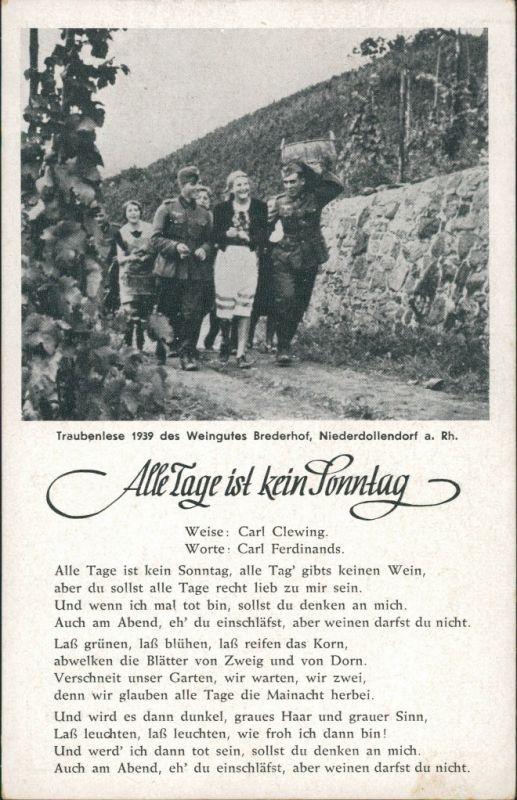 Königswinter Traubenlese Weingut Brederhof