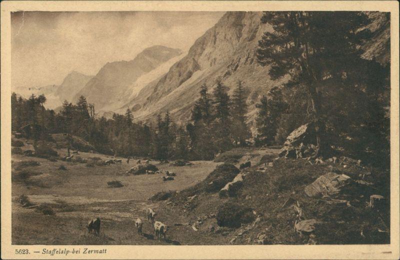 Ansichtskarte Zermatt Umlandansicht Partie a.d. Staffelalp Berg Panorama 1920