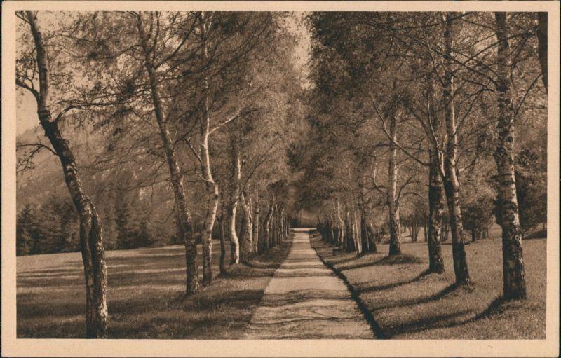 Ansichtskarte Bad Kohlgrub Birken-Allee 1928