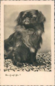 Ansichtskarte  Tiere - Hunde, Hund Fotokunst - bin ich nicht schön 1934