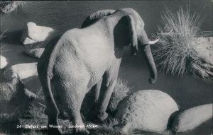 Ansichtskarte Südwest-Afrika Namibia Elefant am Wasser 1970