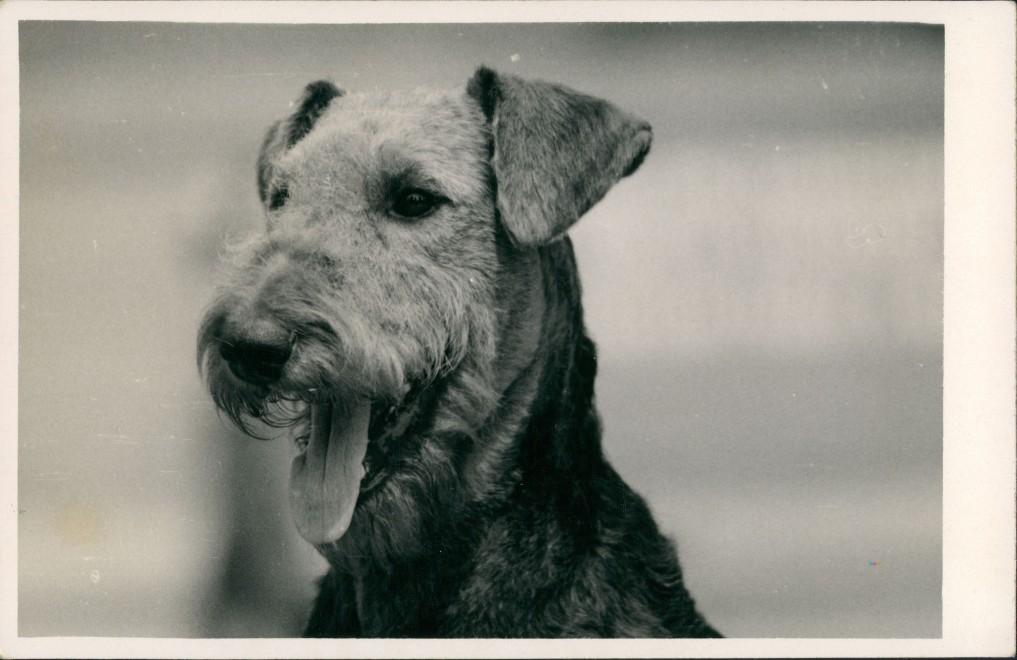 Tiere - Hunde Hund auf Foto (Photo Atelier Praha, Prag) 1960 Privatfoto