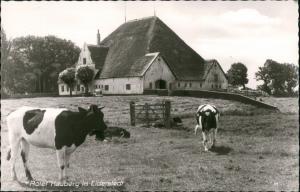 Eiderstedt Eiderstedt, Husum, Roter Hauberg, Tiere Kühe Bauernhof 1960