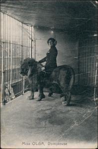 Ansichtskarte  Zirkus Cirkus Miss Olga Domteuse - Löwe 1906