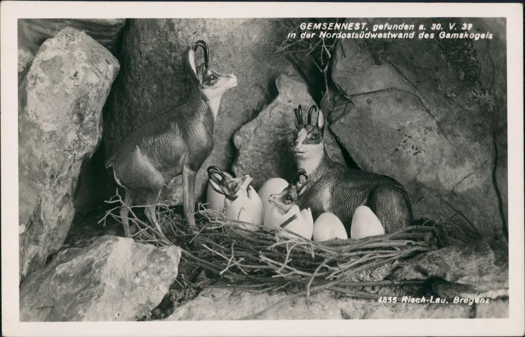 Ansichtskarte  Gemsennest 1932 0