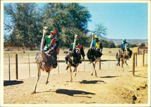 Postcard Oudtshoorn Ostriches racing at full speed 1995