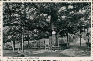 Bad Brückenau Partie a.d. 1000 jährigen Eiche, Baum, Tree 1930