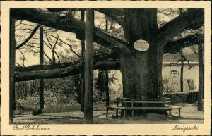 Bad Brückenau Partie a.d. Königseiche, Baum Eiche, old tree view 1930