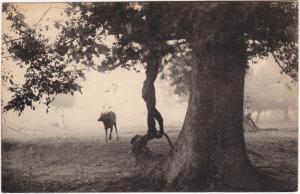 Postcard Nara 奈良市 奈良公園/Hirsch mit Baum im Nara-Park