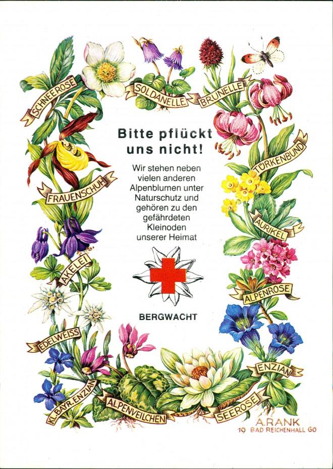 Blumen namen mit bild